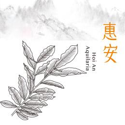 惠安—沉香